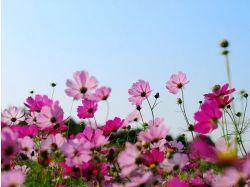 Картинки открытки цветы красивые
