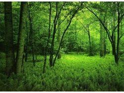 Фото леса летом