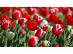 Картинки красные цветы