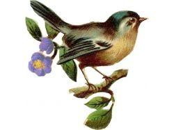 Птички картинки для детей