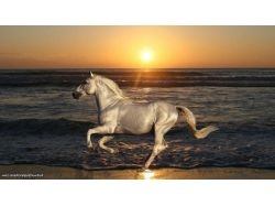 Фото лошадей обои
