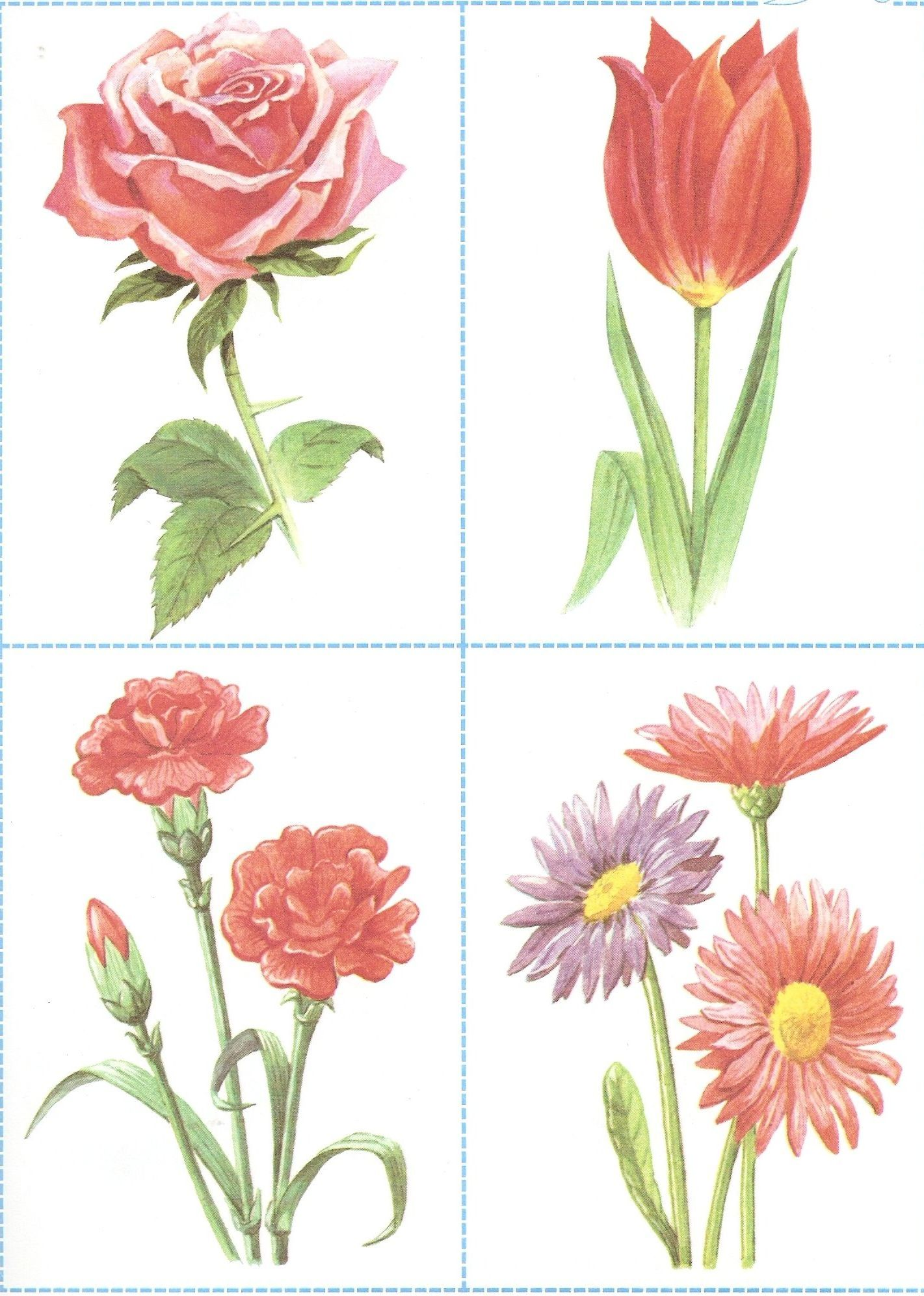 Полевые и садовые цветы картинки