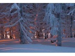 Фото лесов россии