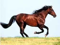 Аватарки с лошадьми