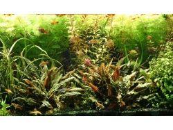 Аквариумная трава фото