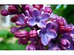Картинки для рабочего стола весенние цветы