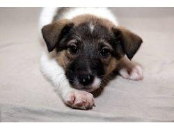 Картинки собак и кошек