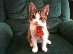 Мультяшные картинки кошек