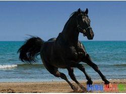 Лошади на море