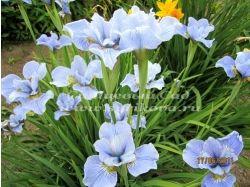 Фото и названия садовых цветов
