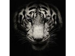 Черно белые картинки с животными