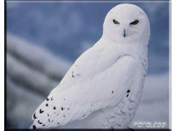 Красивые картинки птиц
