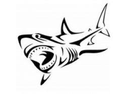 Акула рисунки