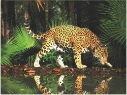 Картинки животных джунглей