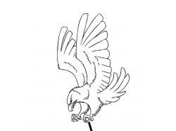 Картинки птиц для раскрашивания