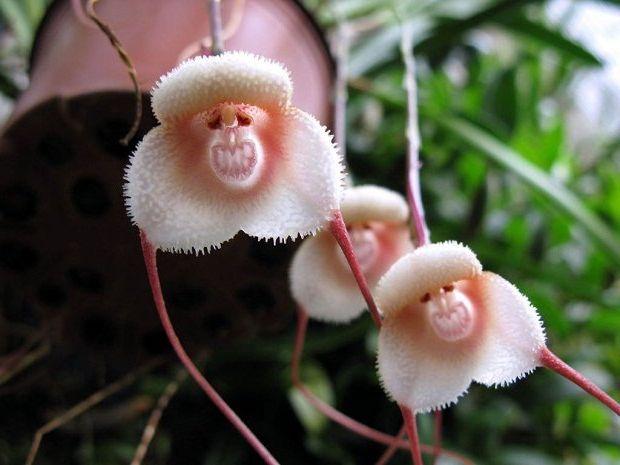 луковичные цветы комнатные фото с названиями