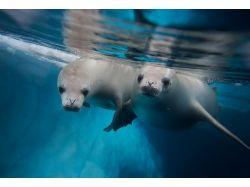 Картины подводный мир