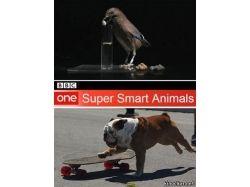 Картинки животных в хорошем качестве