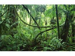 Картинки животные и растения 9