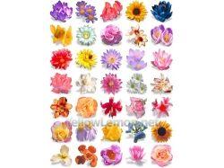 Цветы картинки и названия