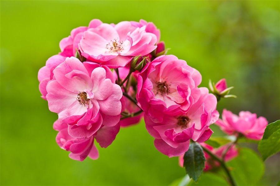 С днем рождения фото девушке цветы, доброе