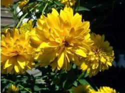 Цветы фото с названиями