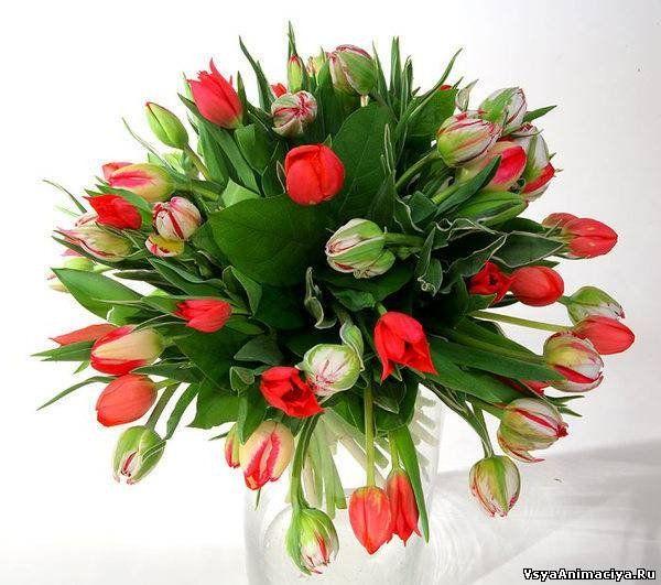 Скачать бесплатно картинки букеты живых цветов 13