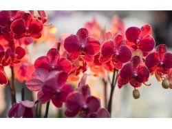 Кухня орхидея фото