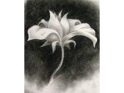 Черно белые рисунки карандашом цветы