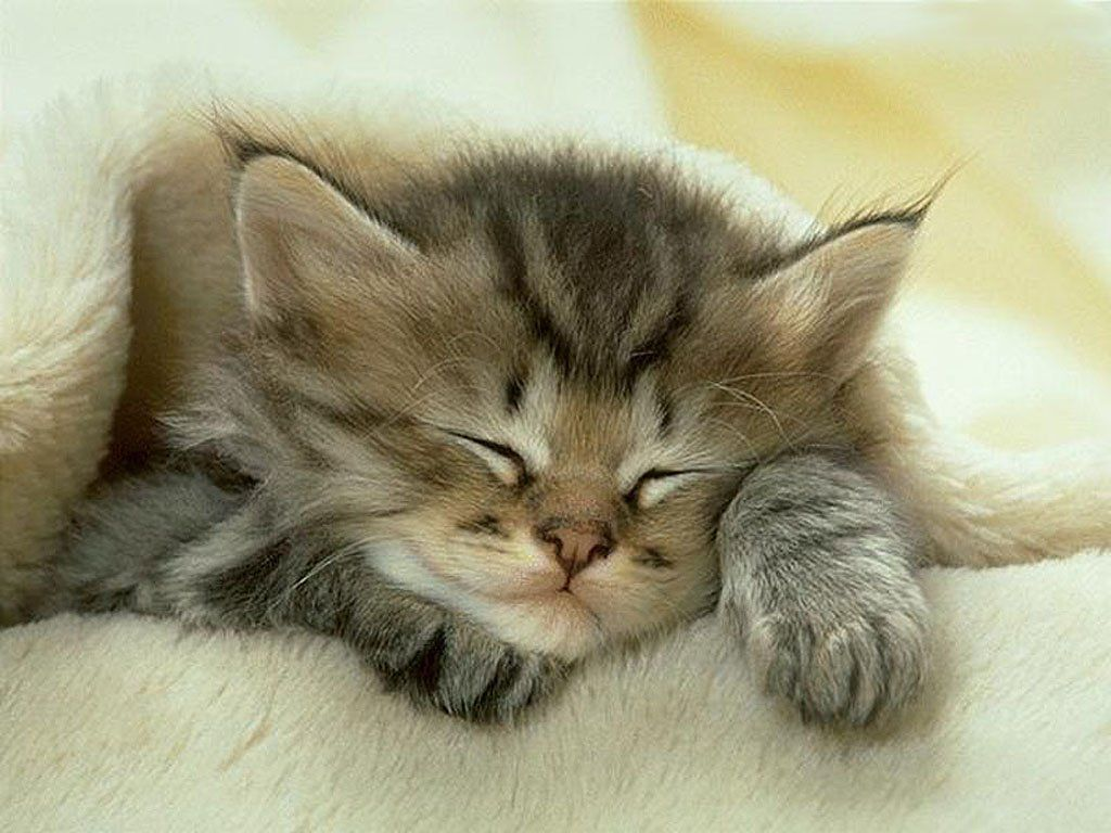 картинка сладких снов котенок более что
