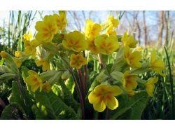 Фотографии природы весной