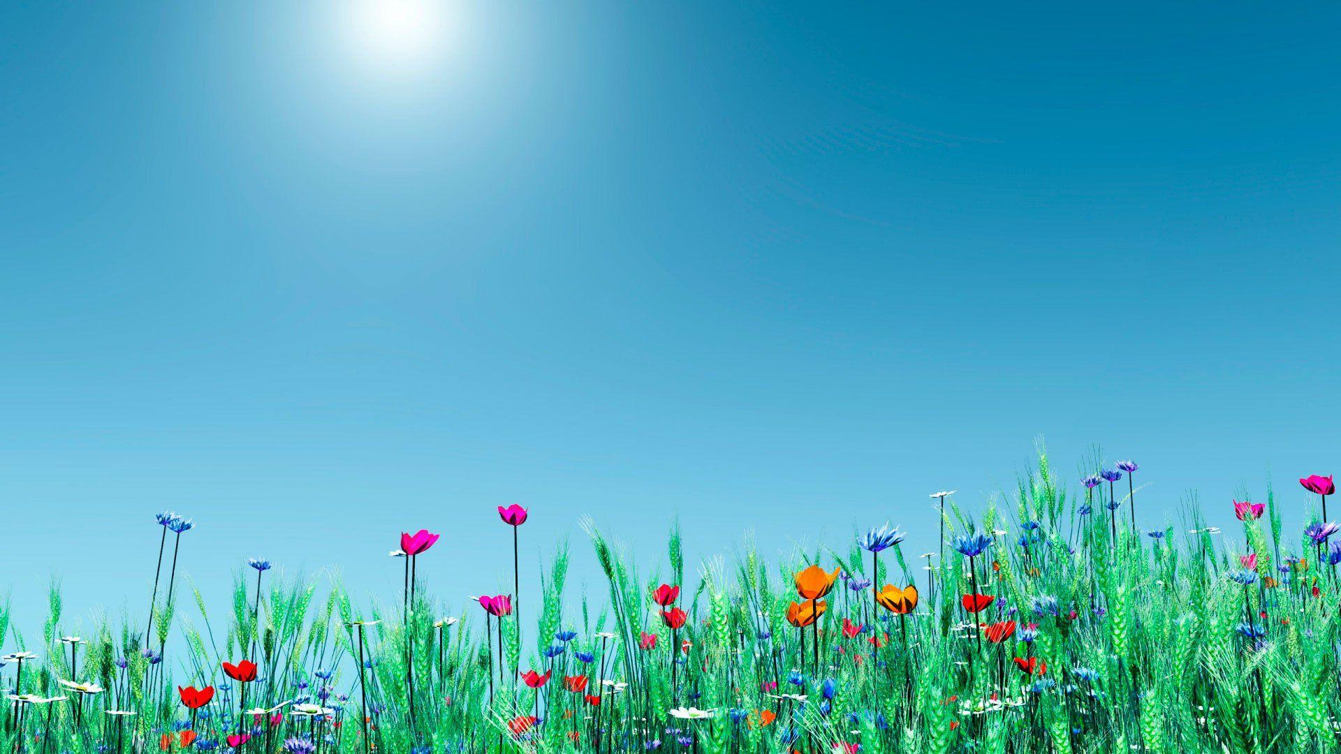 полевые цветы небо облака без смс