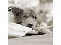 Черно белое фото животных 9