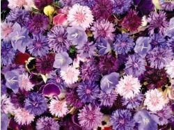 картинки цветы 7