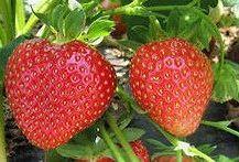 Садовые ягоды названия