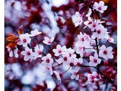 Природа весной фото