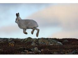 Картинки зайцев с цветами