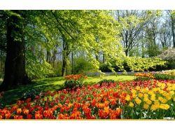 Красивые картинки природы весна