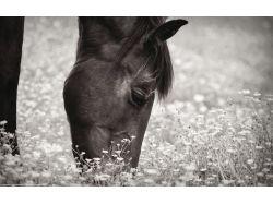 Картинки самых красивых лошадей