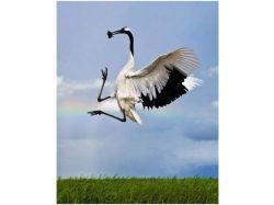 Птицы азии фото