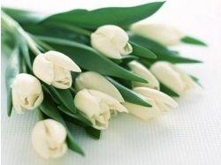 яндекс цветы