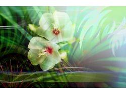 Абстрактные цветы картинки 3