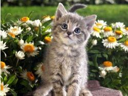Смотреть картинки с котятами