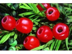 Лекарственные растения в картинках с названиями для детей