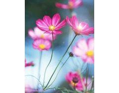 Картинки на телефон цветы скачать бесплатно