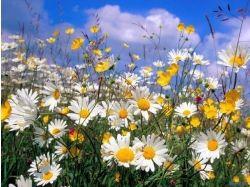 Украинские цветы картинки