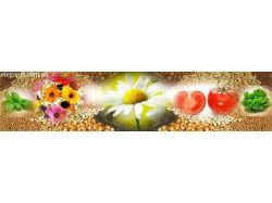 Смотреть картинки цветов бесплатно