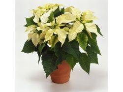 Фото цветов с названиями
