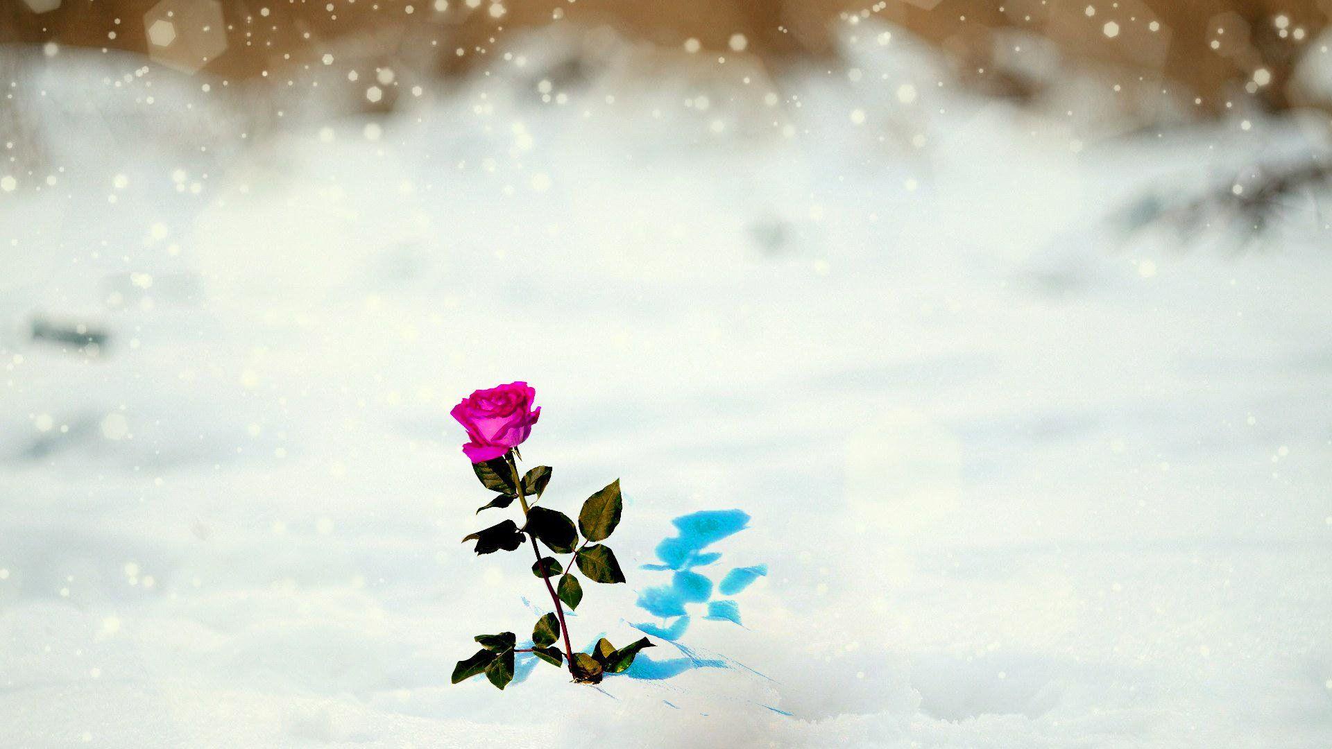 Под снегом бесплатно