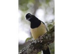 Птицы южной америки фото